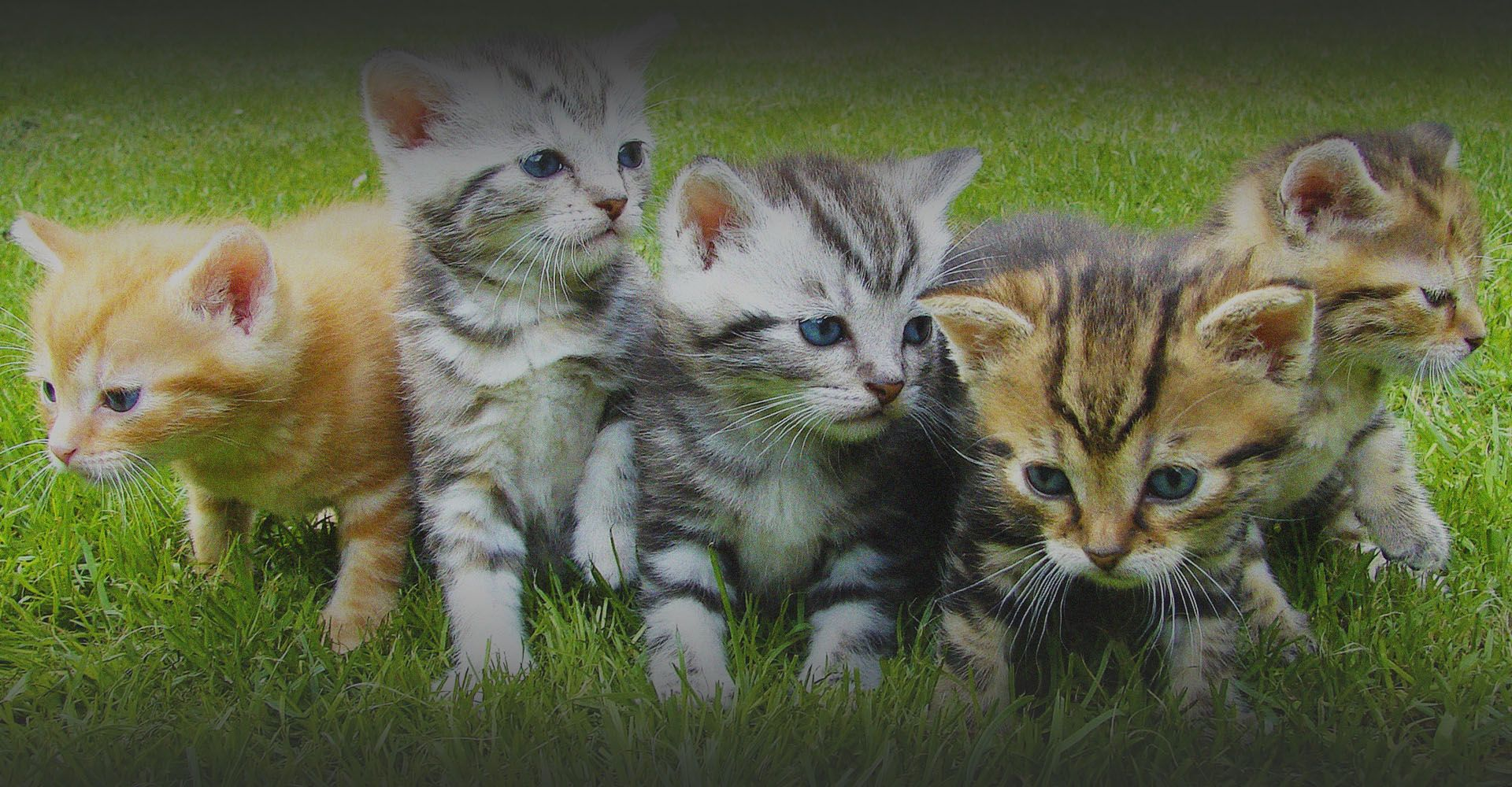 Miami Pet Clinic: Vet in Miami, Little Havana, Allapattah